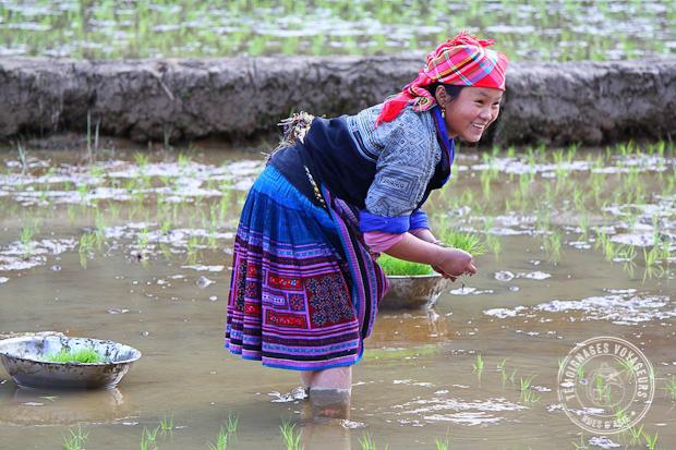 Périple intense au Vietnam entre moto et trekking
